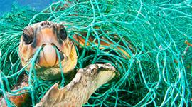 salvare il mare